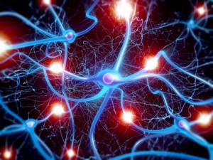Neuron Cells