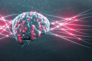 Human brain and neural nerve connections
