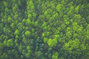 Forest Canopy areal photo