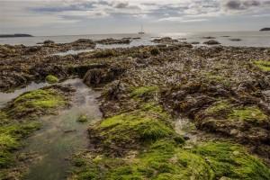 seaweed washed up on shore