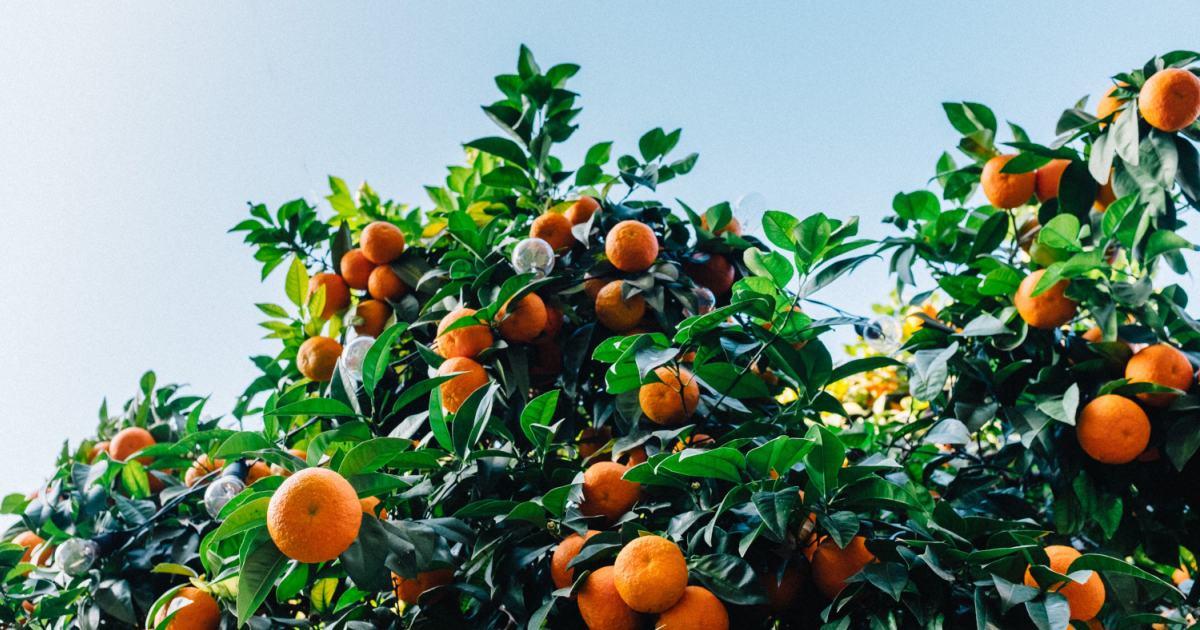 oranges_facebook_optimized