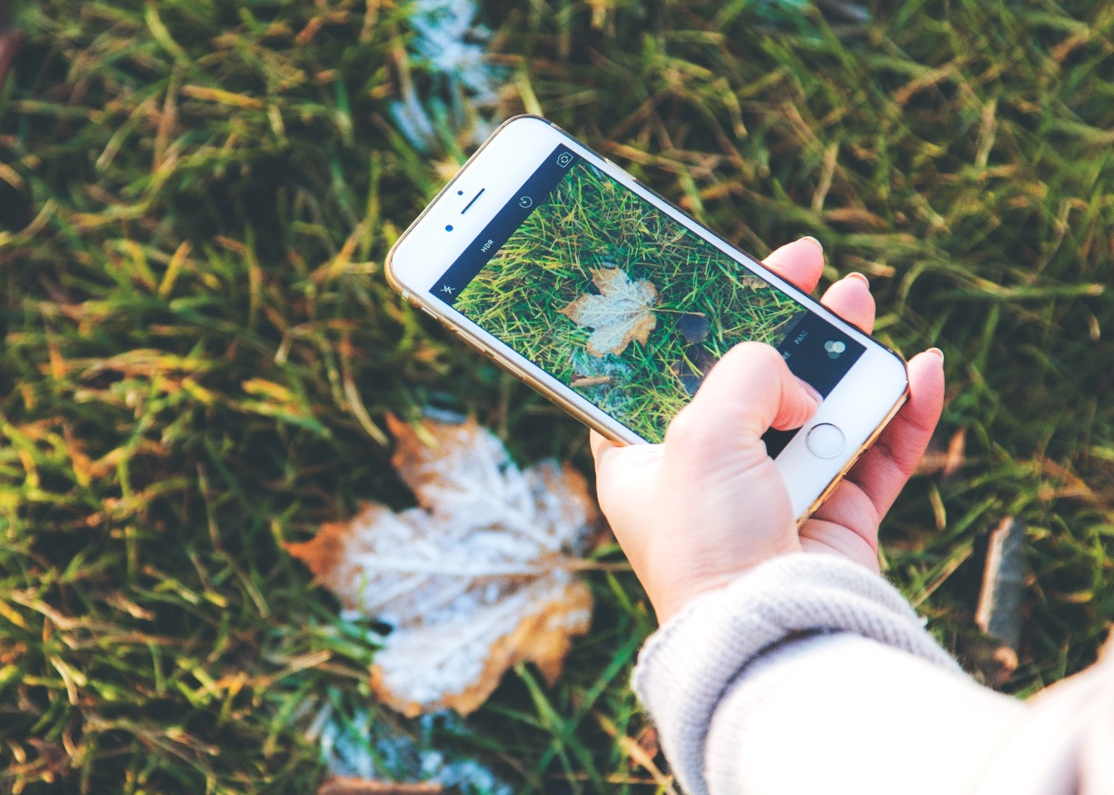 girl taking a picture of a leaf with her cell phone