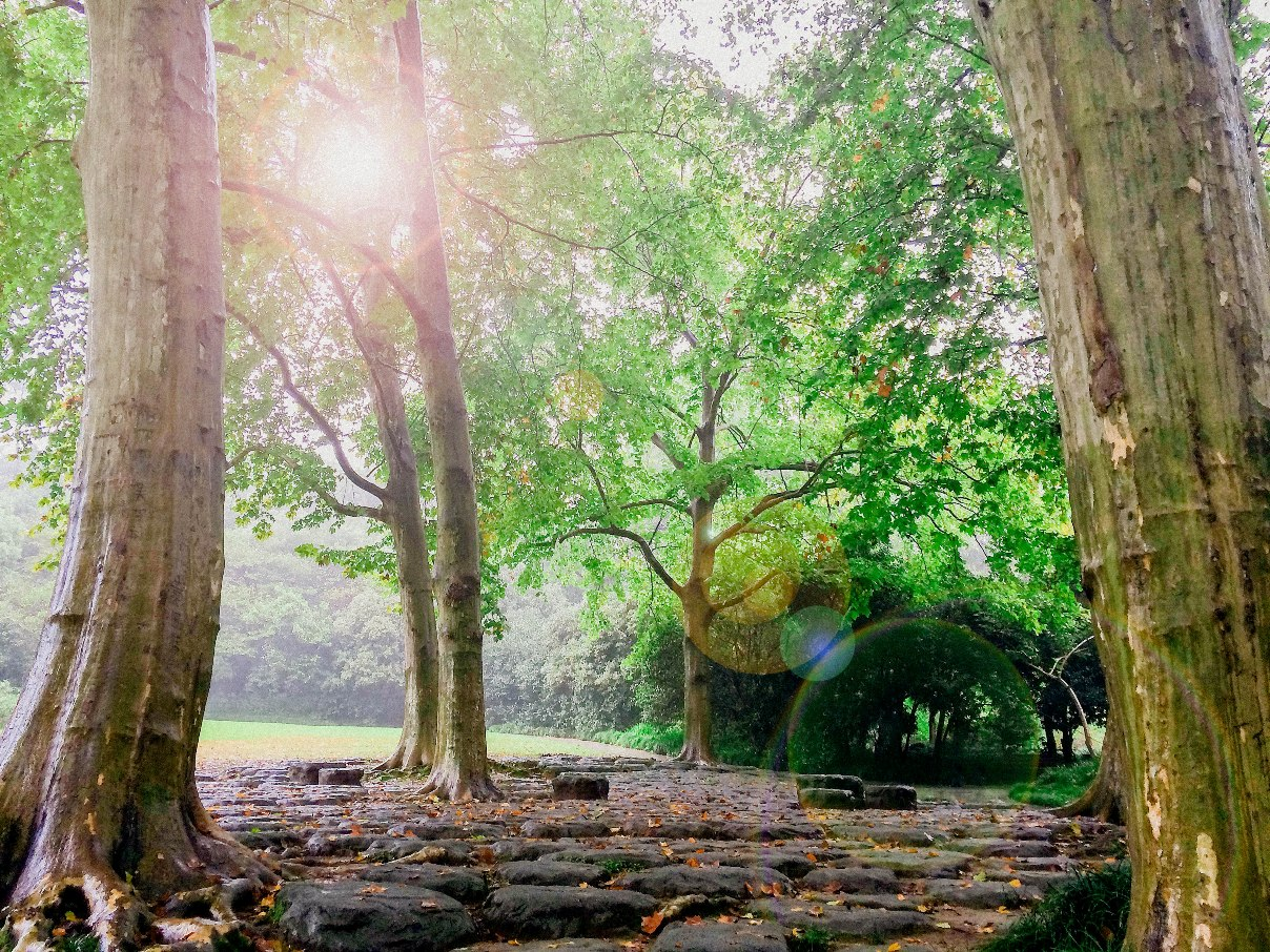 Sun Shining into a beautiful grove of trees and natural stepping stones