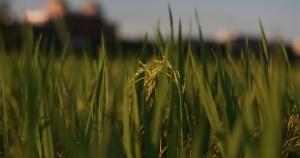 close up of weeds