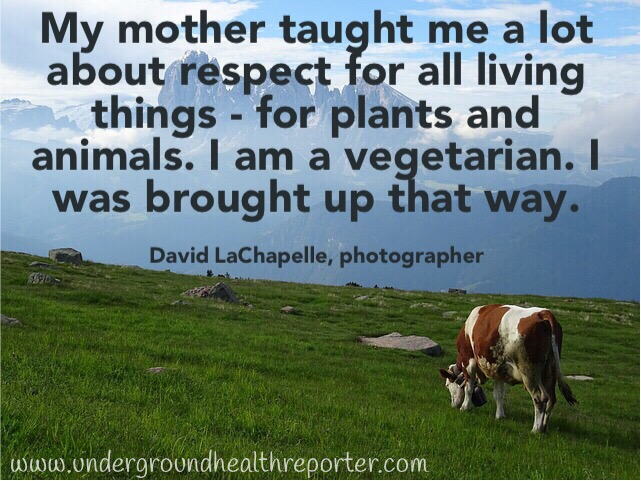 photographer; David LaChapelle quote