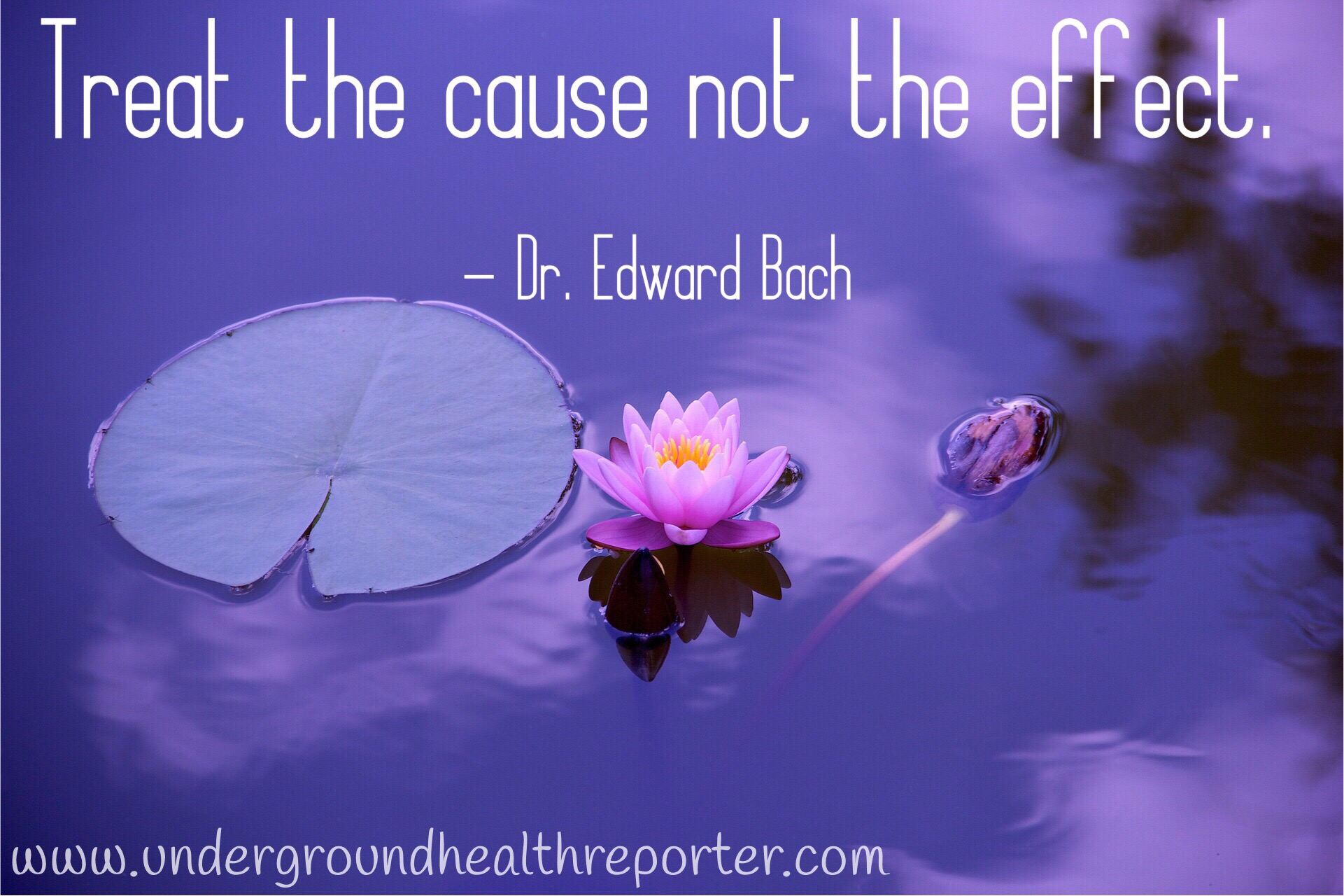Dr. Edward Bock Quote