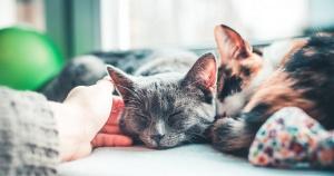 sleeping-cats_facebook