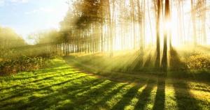 sunshine-nature_facebook