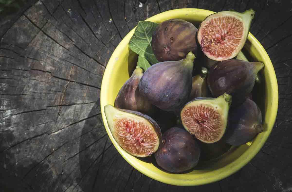 figs_medium