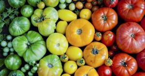rainbow-tomatoes_facebook