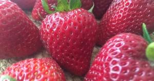 strawberries-burlap-2_faceb