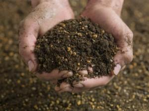soil bug