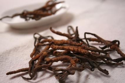 benefits of cordyceps
