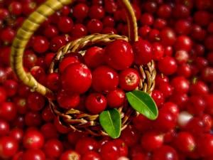 benefits of lingonberries