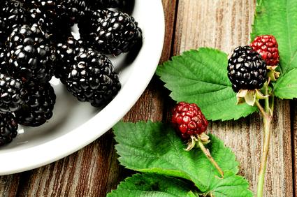 black raspberries and cancer