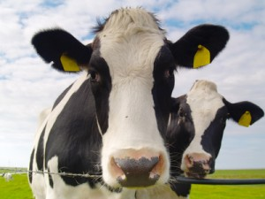 benefits of raw milk
