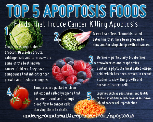 Apoptosis Cancer Facts Infographics
