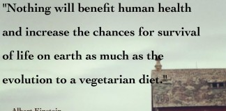 Albert Einstein quote about the evolution to vegetarianism