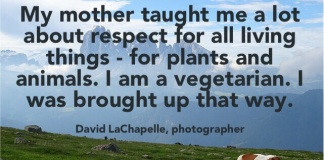 photographer; David LaChapelle quote