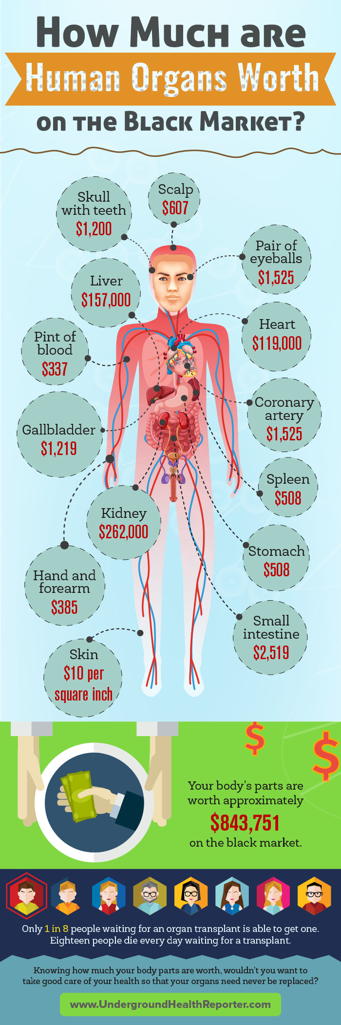 Infographic of the values of human organs on the black market