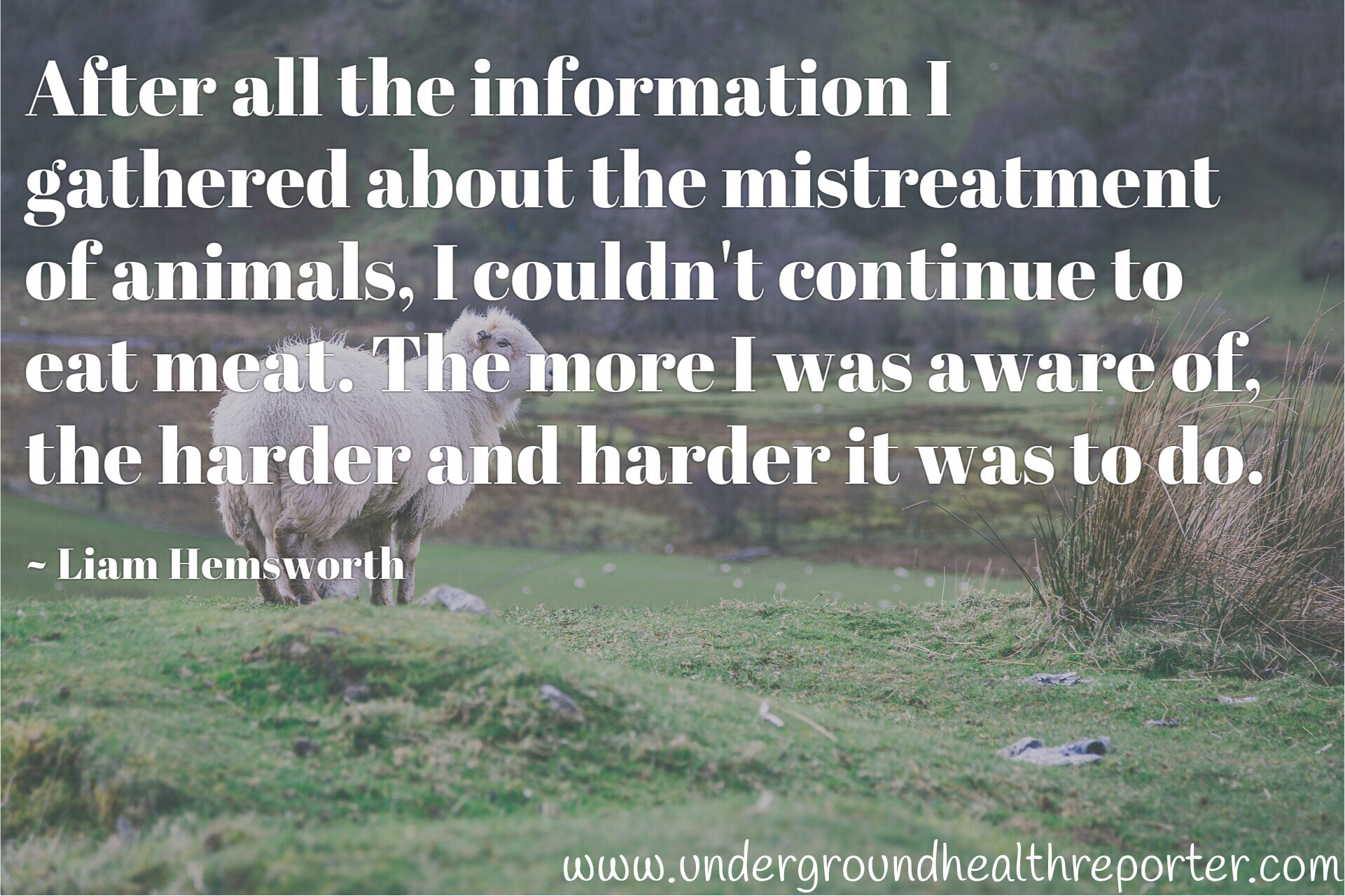 Liam Hemsworth quote about cruelty to animals