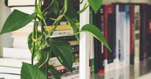 house plant growing on shelf by books