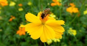 yellow-flower-pollen_facebo