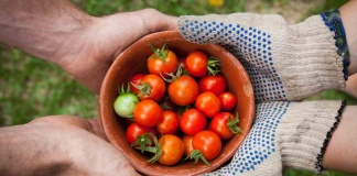 four hands holding a bowl of tomatos